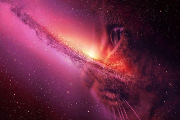 kat, poes, katten, poezen, magie, heks, hekserij, godin, bastet, egypte, toveren, demonen, engelen, universum, voorspellen, zwarte kat, geluk, ongeluk